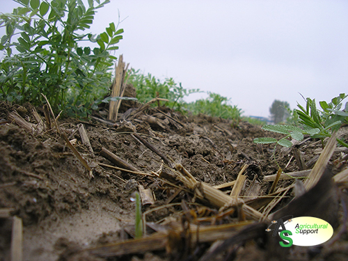 Cover Crops Agricultural Support